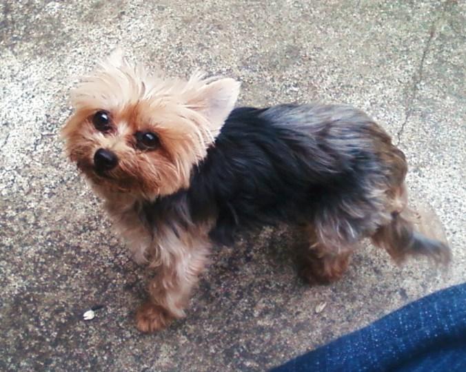 Lost Dog - Tacoma, Wa