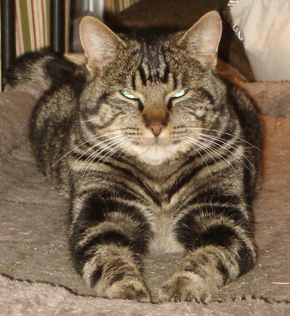 Lost Cat – Everson Wa