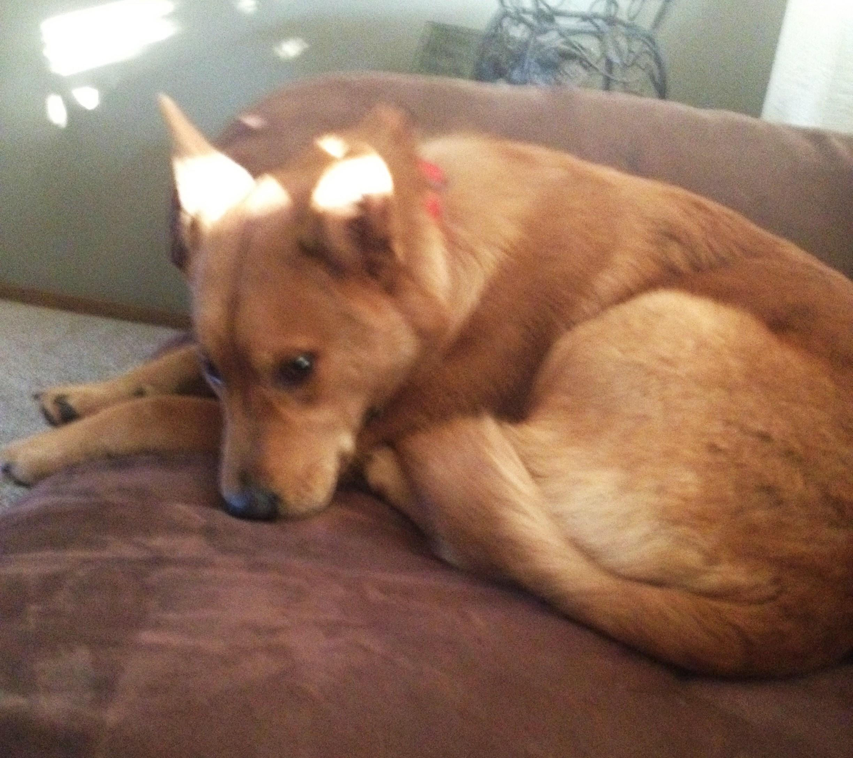 Lost Dog – Yakima Wa