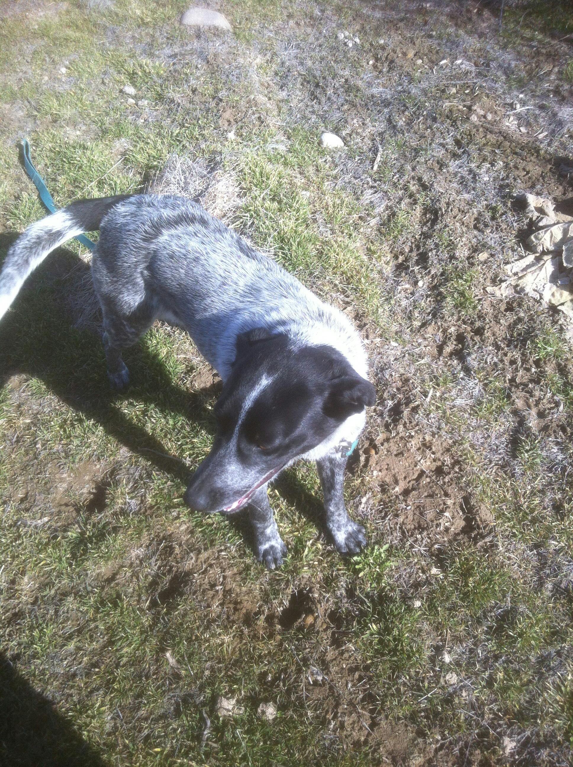 02 June 2014 Lost Amp Found Pets Wa State