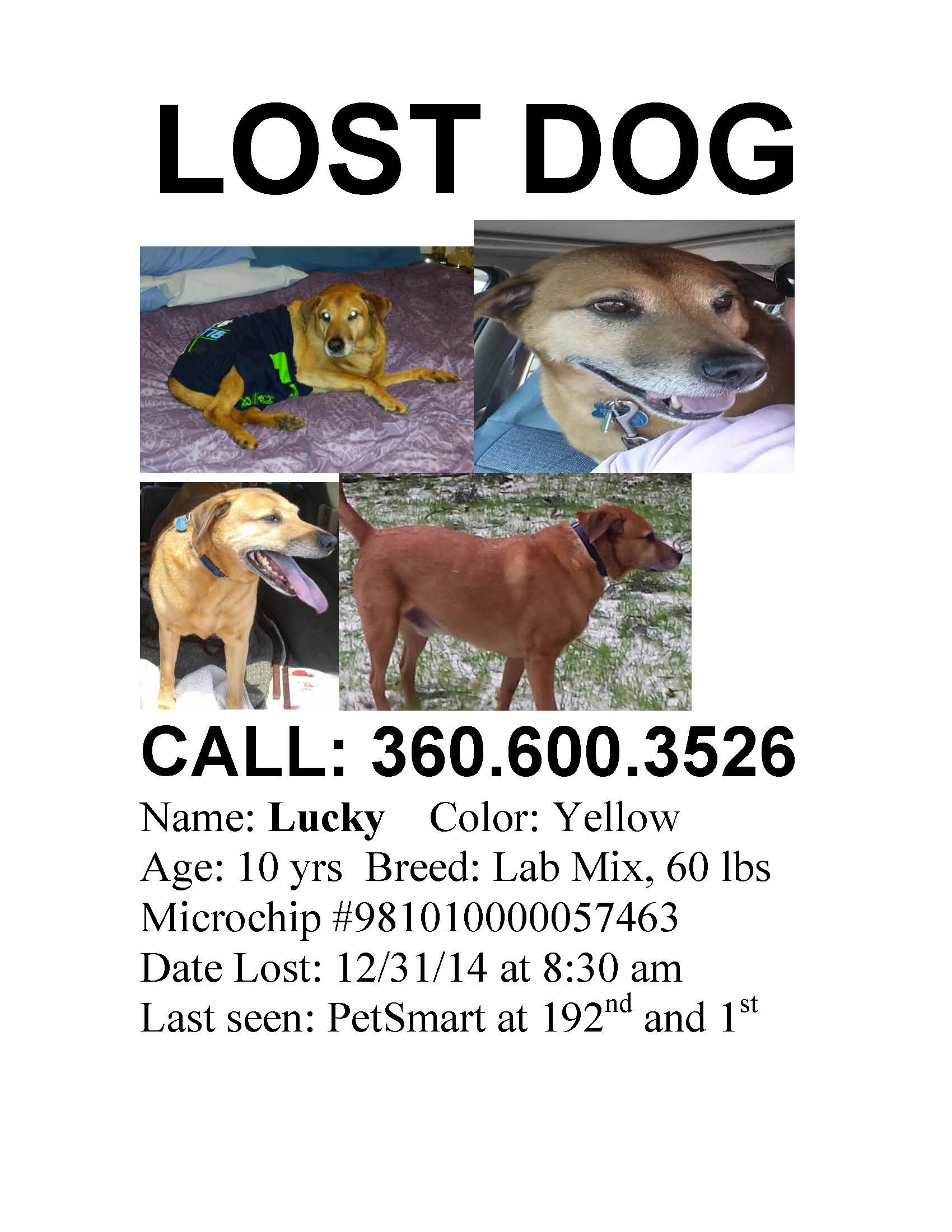 lost pet template – Found Poster Template
