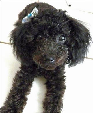 Found Dog Spokane Wa Lost Found Pets Wa State