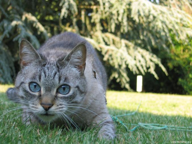 sinsi-kedi-2