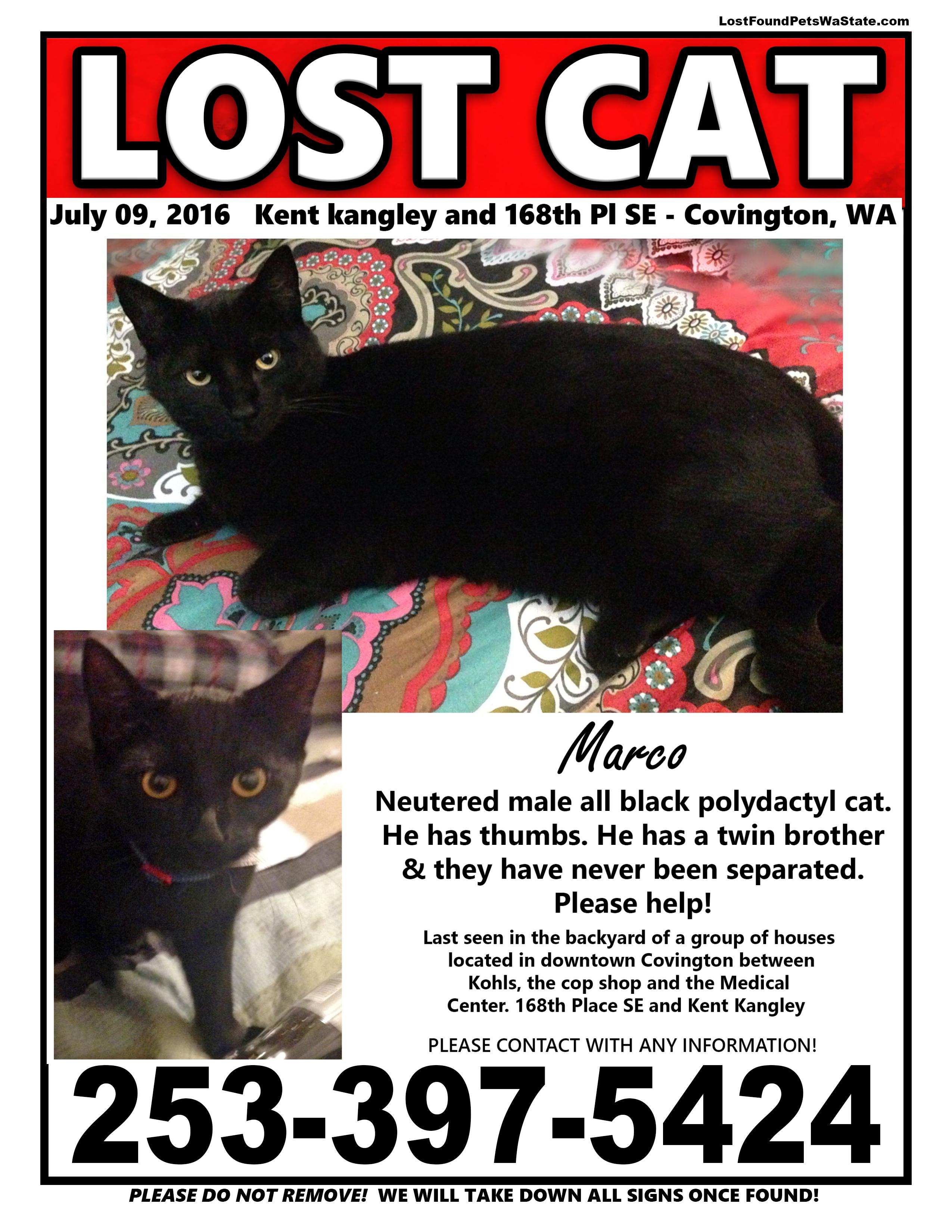 Missing Cat – Covington, Wa | LOST & FOUND PETS WA STATE