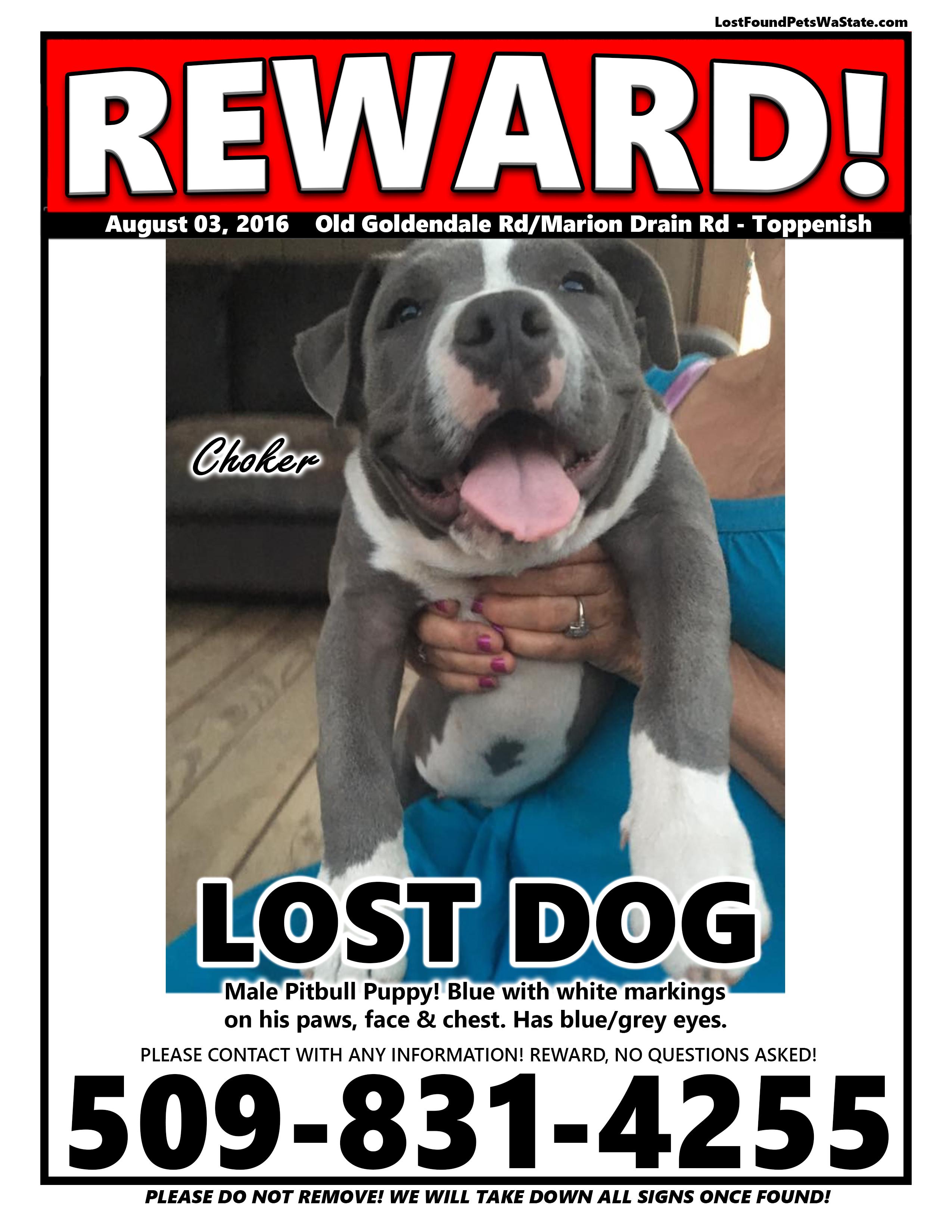 Missing Dog – Toppenish, Wa | LOST & FOUND PETS WA STATE