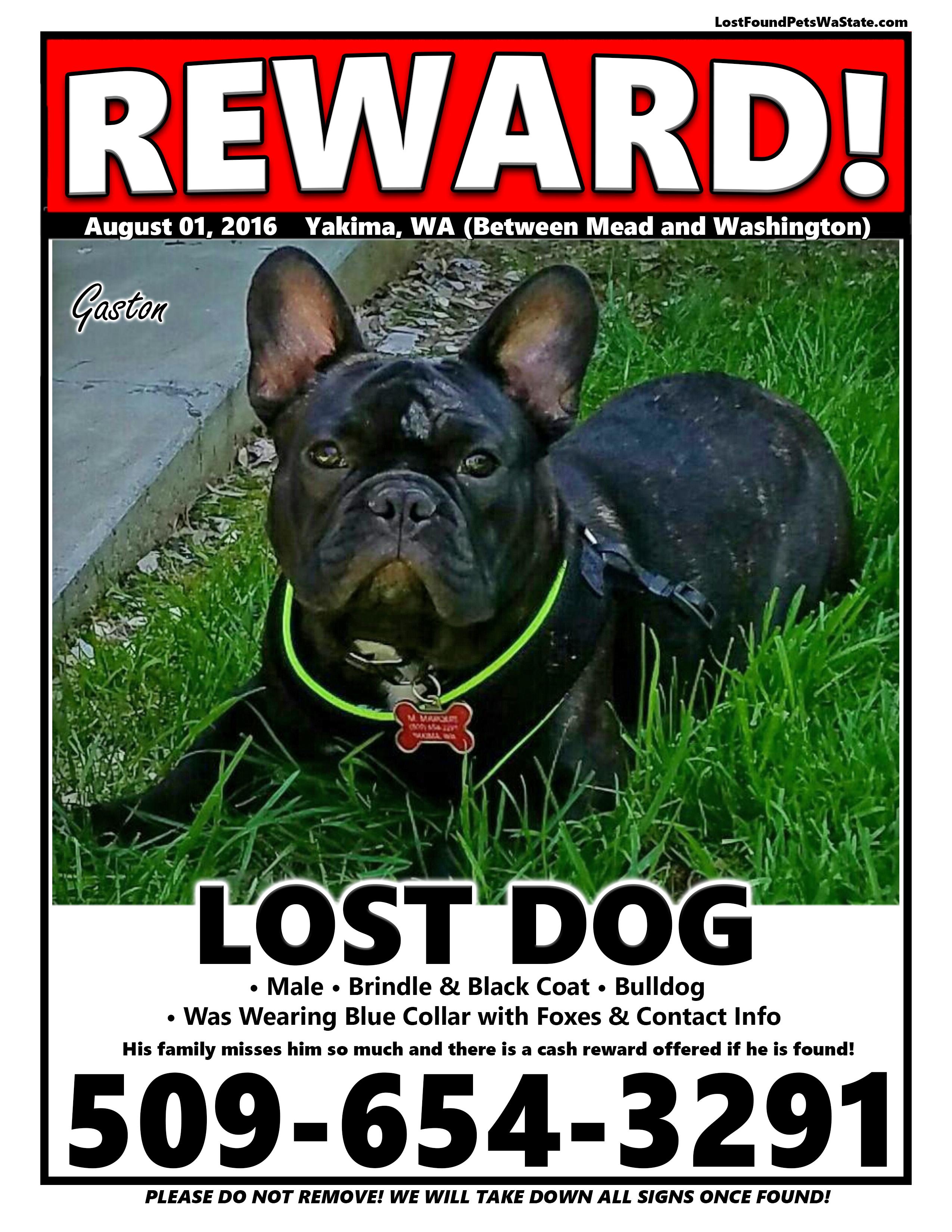 Missing Dog – Yakima, Wa | LOST & FOUND PETS WA STATE