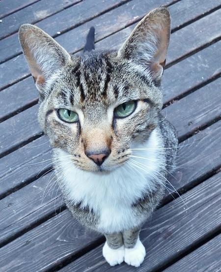 kitty-713 (1).jpg