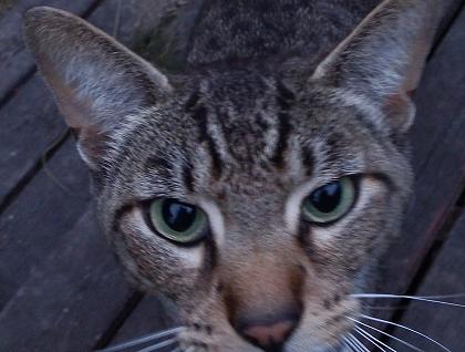 kitty7-7 (1)